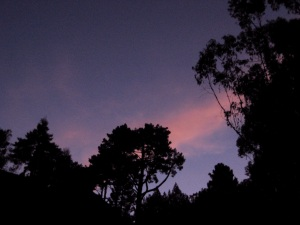 The sky and trees at 6:30 - Sept 19, 2009